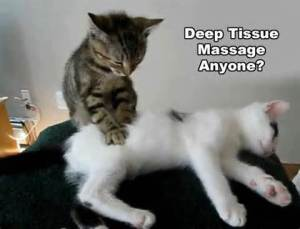 kitten massage